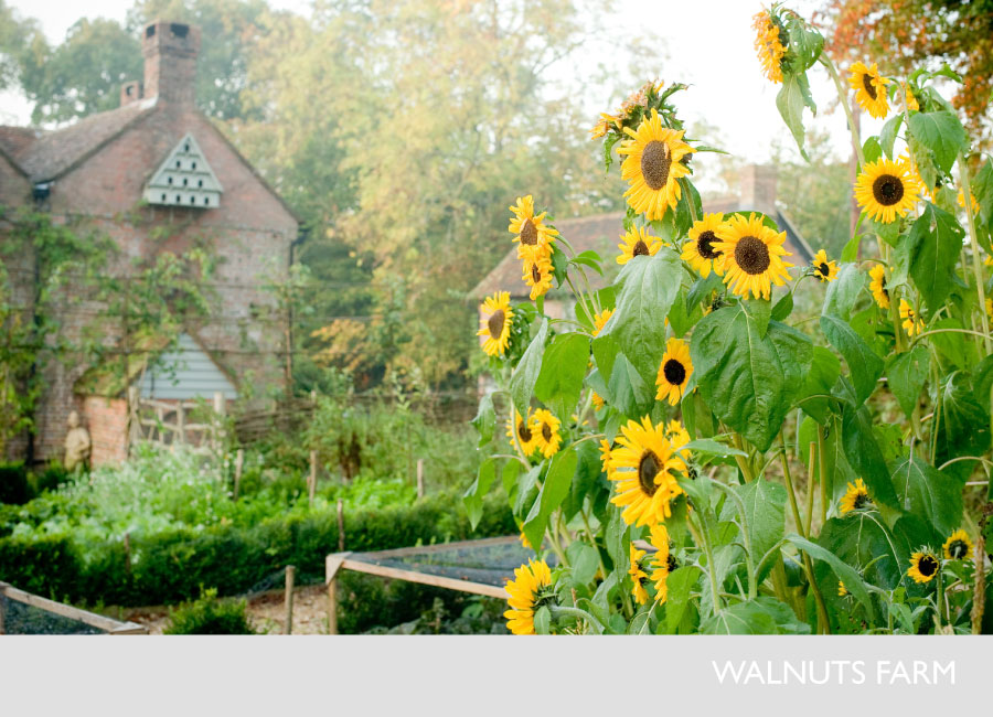 1949-walnuts-farm-film-and-photographic-rustic-shoot-location-house-sunflowers-6