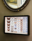 Walnuts Farm Framed Photo Butterfly Collection