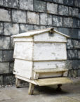 Walnuts Farm bee hive