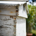 WalnutsFarms bee hive